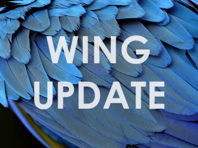 アフィンガー5-update
